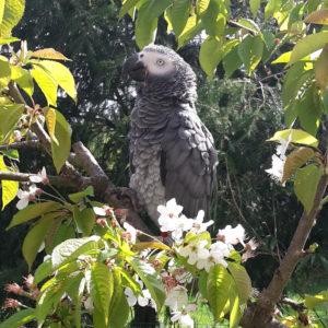 Oiseaux gris | ASSOCIATION GEDO